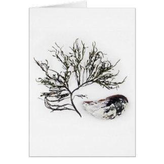 Seaweed and Mussel Shell Notecard Greeting Card