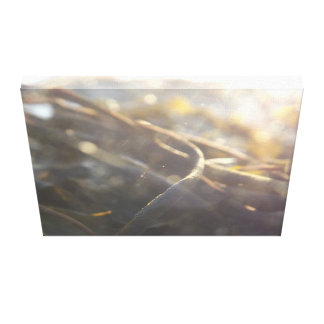 Seaweed and Sun on Canvas Canvas Print