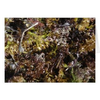 seaweed at Wells Beach, Maine Note Card