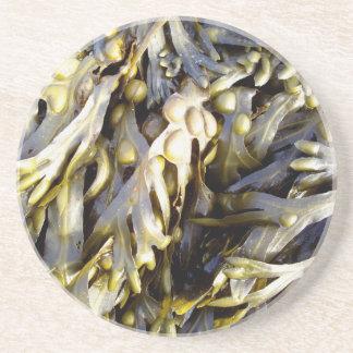 Seaweed Beverage Coasters