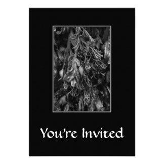 Seaweed, Black and White. Invitation