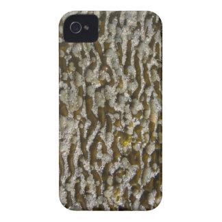 Seaweed - Blackberry Case-Mate Case iPhone 4 Case
