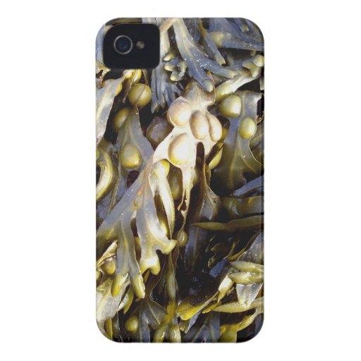 Seaweed iPhone 4 Case-Mate Case