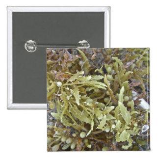 Seaweed Coordinating Items 15 Cm Square Badge