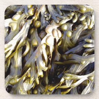 Seaweed Drink Coasters