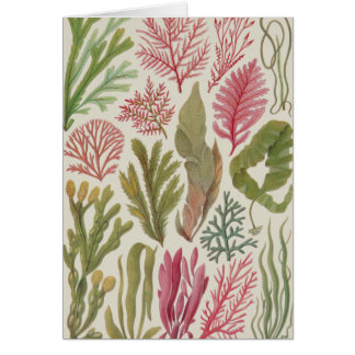 Seaweed Family Cards