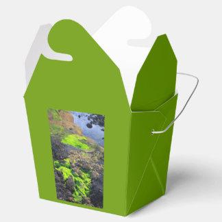 Seaweed Favour Box
