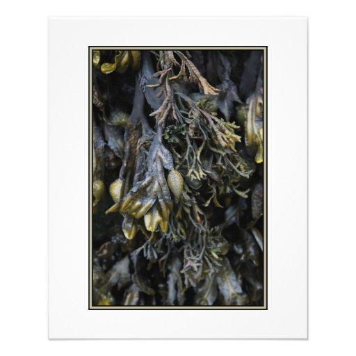 Seaweed. Flyer