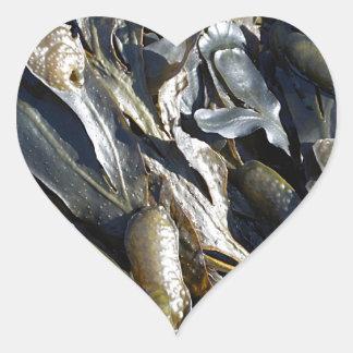 Seaweed Heart Sticker