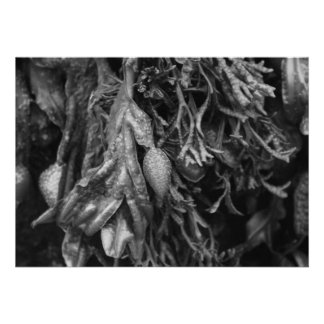 Seaweed in Black and White. Personalized Announcement