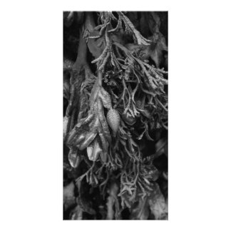 Seaweed in Black and White. Photo Greeting Card