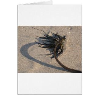 Seaweed in the Winter Sun Cards