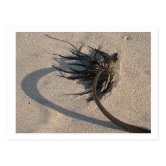 Seaweed in the Winter Sun Postcards