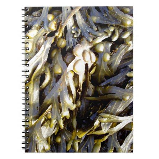 Seaweed Note Books