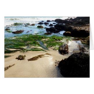 Seaweed on a Beach Greeting Card