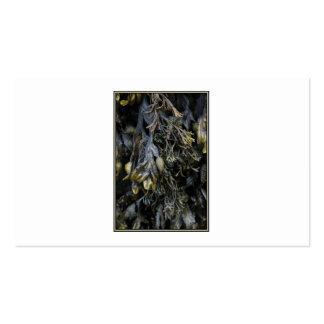 Seaweed. Pack Of Standard Business Cards