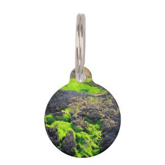 Seaweed Pet Nametags