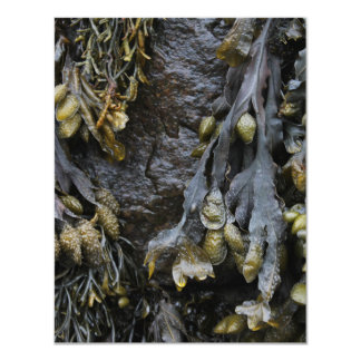 Seaweed Picture. Personalized Invites