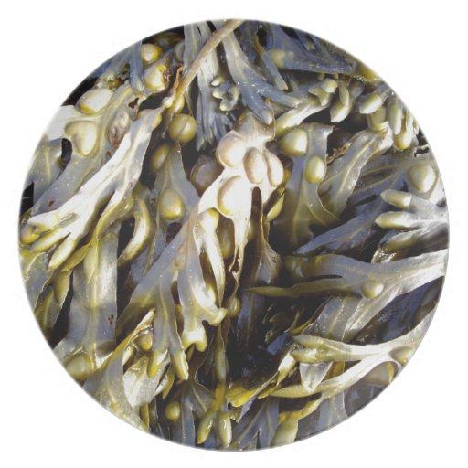 Seaweed Dinner Plates