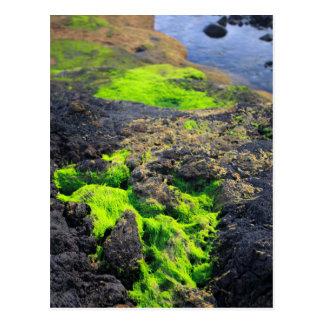 Seaweed Postcard