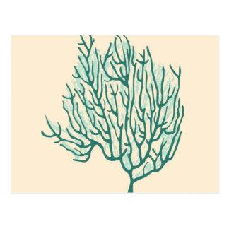 Seaweed Post Cards