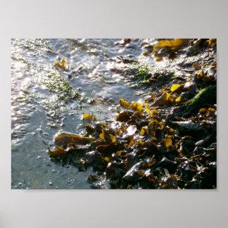 - - -seaweed - - poster