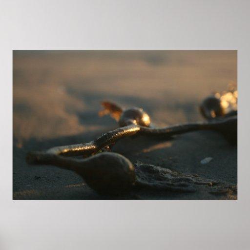 seaweed posters