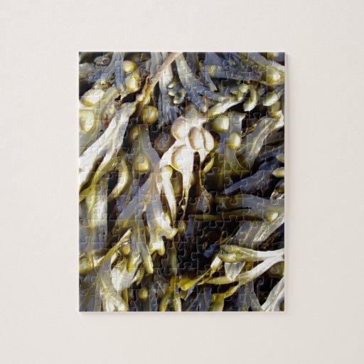 Seaweed Puzzle