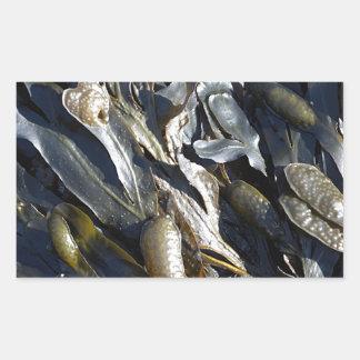 Seaweed Rectangular Sticker