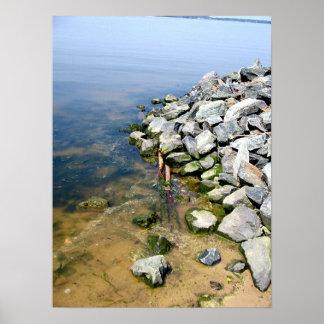 Seaweed Rocks Poster