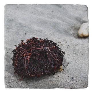 Seaweed Roots Trivets
