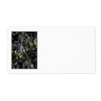 Seaweed. Shipping Label