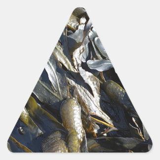 Seaweed Triangle Sticker