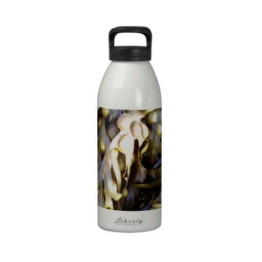 Seaweed Reusable Water Bottle