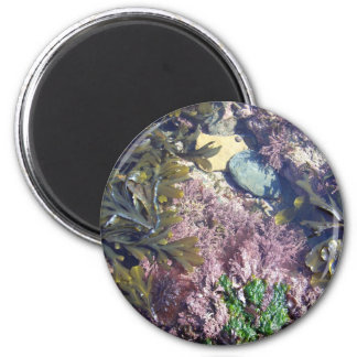 Seaweeds in a pool 6 cm round magnet
