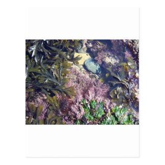 Seaweeds in a pool postcard