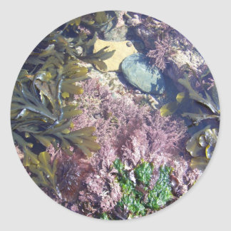 Seaweeds in a pool round sticker