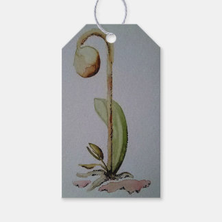 Seedling Gift Tag