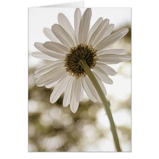 sepia daisy Hello card