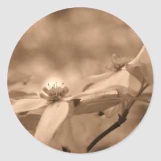 Sepia Dogwood Blossoms Flower Photography Sticker