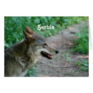 Serbia Wolf Card