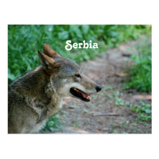 Serbia Wolf Post Cards