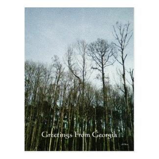 Serene Swamp Georgia Trees Woodland Postcard