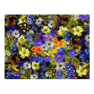 Serenity Prayer Spring Flowers Postcard
