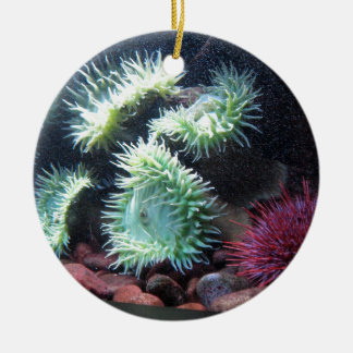 Series sea urchin round ceramic decoration