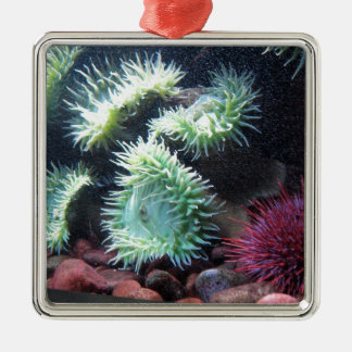 Series sea urchin Silver-Colored square decoration