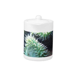 Series sea urchin