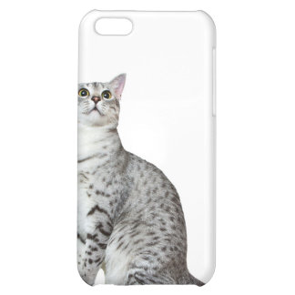 Seriously? Kitty Case For iPhone 5C