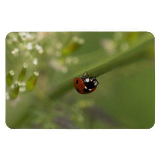 Seven-spot Ladybird Magnet