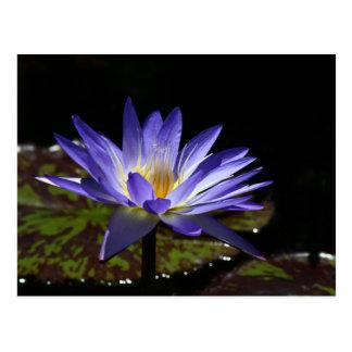 SG Star of Siam Tropical waterlily 2 2015 Postcard